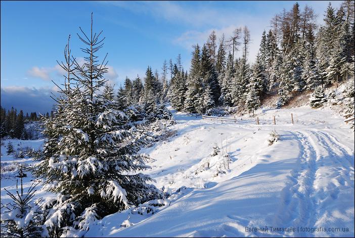 Снежная тропинка