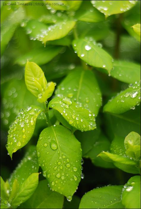 Зеленые листочки с каплями дождя