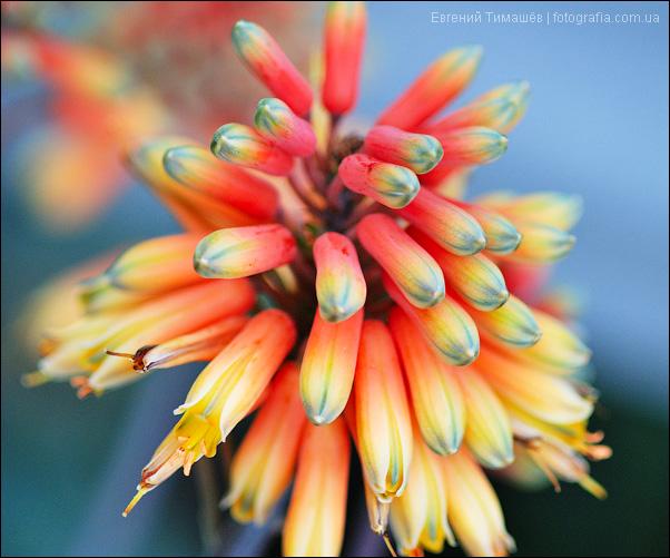 Цветы. Макро