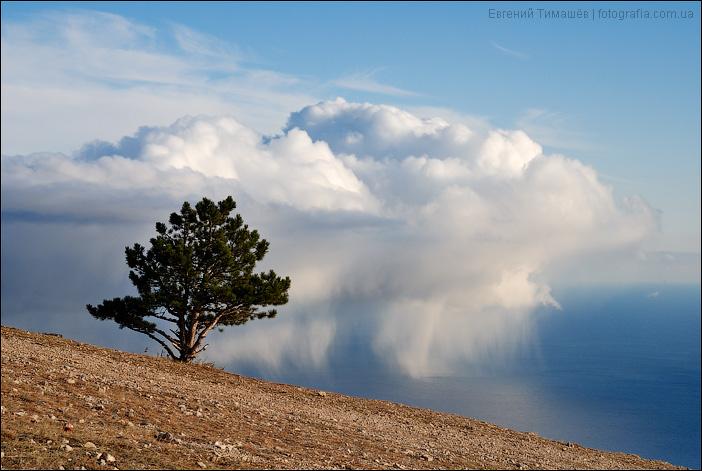 Облачко и дерево
