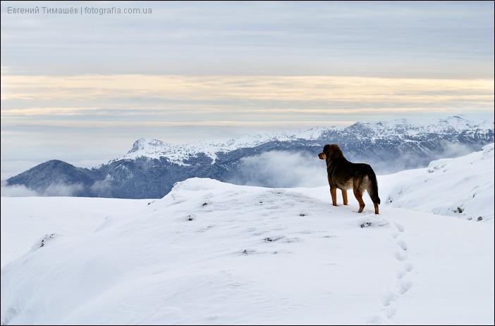 Собака в горах (Крым, Чатыр-Даг)