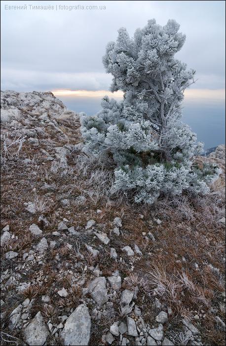 Морозное утро на Ай-Петри