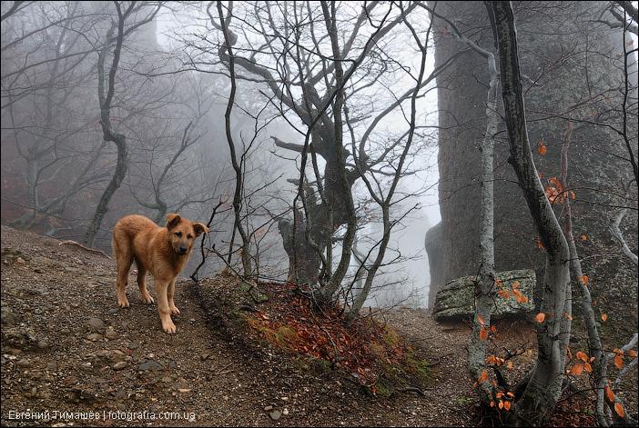 Собака в туманном лесу
