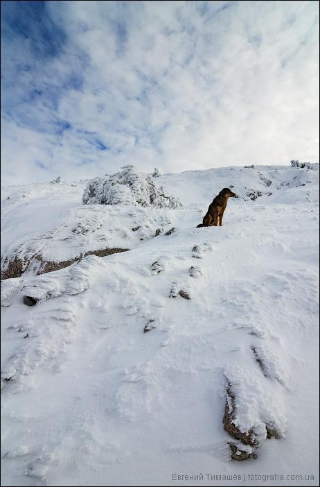 Собака на горном склоне