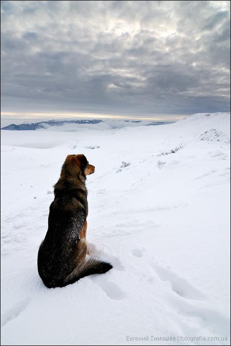 Собака на снегу в горах