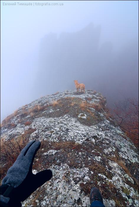 Собака в тумане