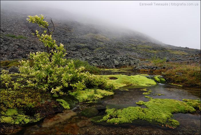 Приток реки Часнайок, Хибины