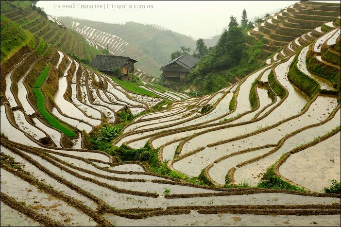 Китай, Пиньян, рисовые терассы Лонгджи