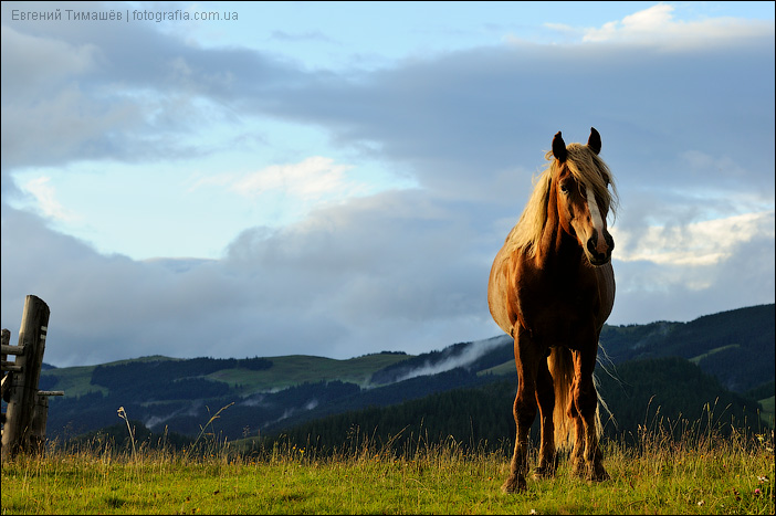 Конь, Карпаты, горы, Дземброня
