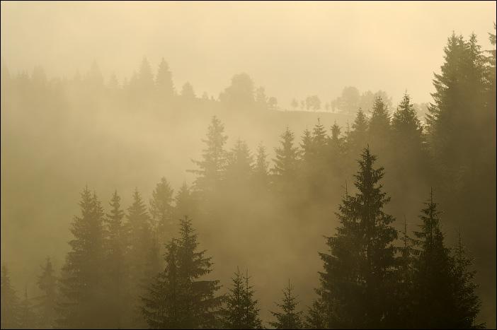 Карпаты, Дземброня, туман