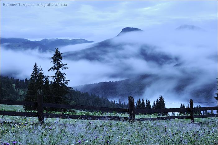 Туманные сумерки в Карпатах