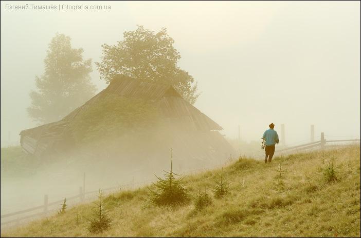 Карпаты, Дземброня, туман, пастух