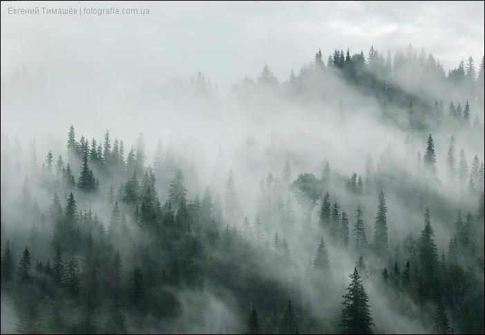 Туман и деревья в Карпатах
