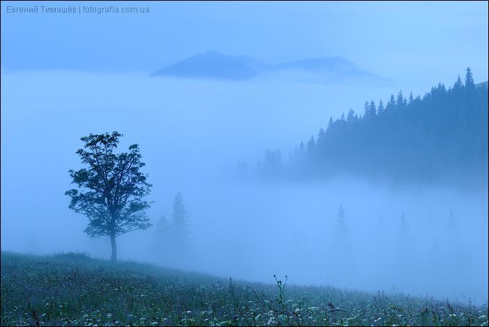 Предрассветный туман в селе
