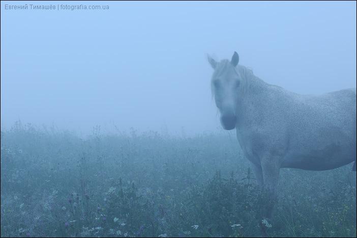 Белая лошадь в тумане