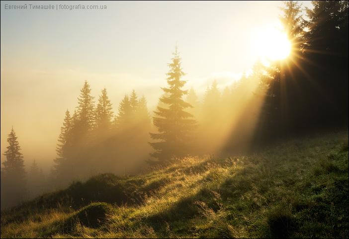 Утренние лучи солнца в тумане