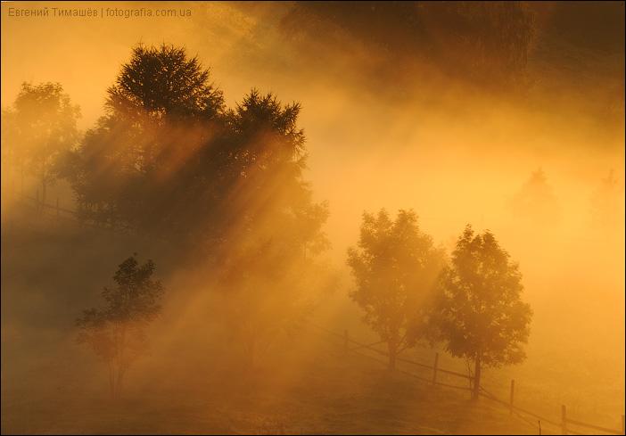 Золотой туман в Карпатах