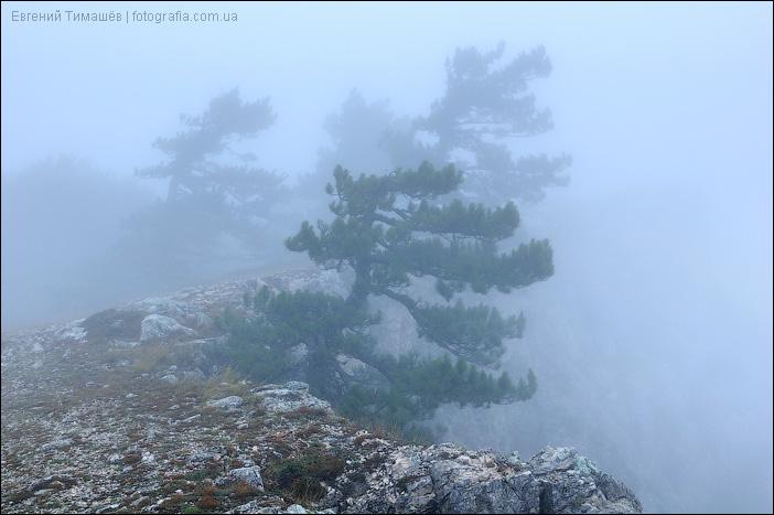 Деревья в тумане на Ай-Петри