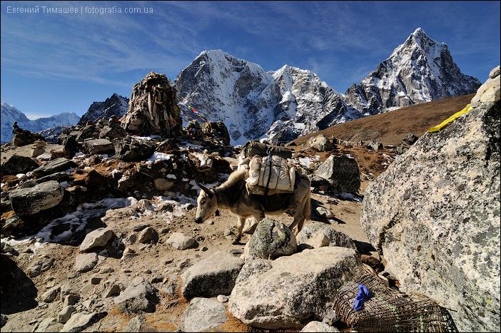 Як в Гималаях, горы, Непал