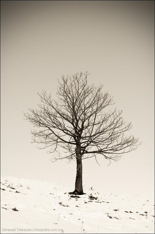 Одинокое дерево зимой