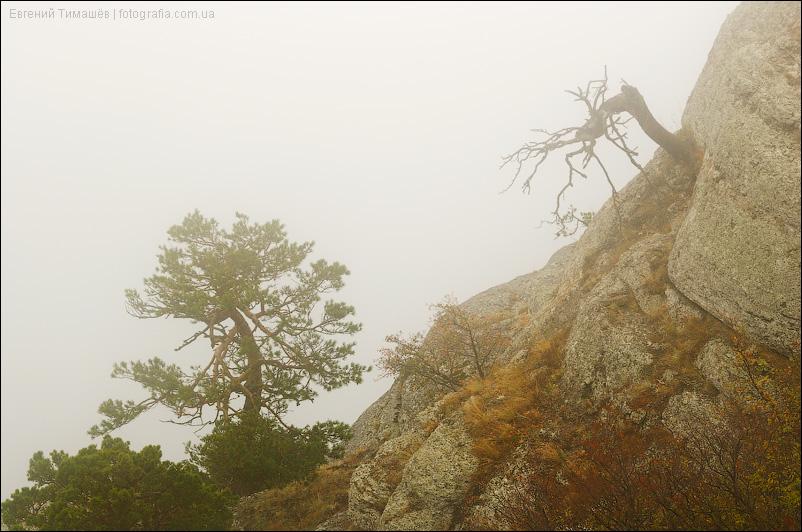 Живое и мертвое дерево в горах, Демерджи, Крым