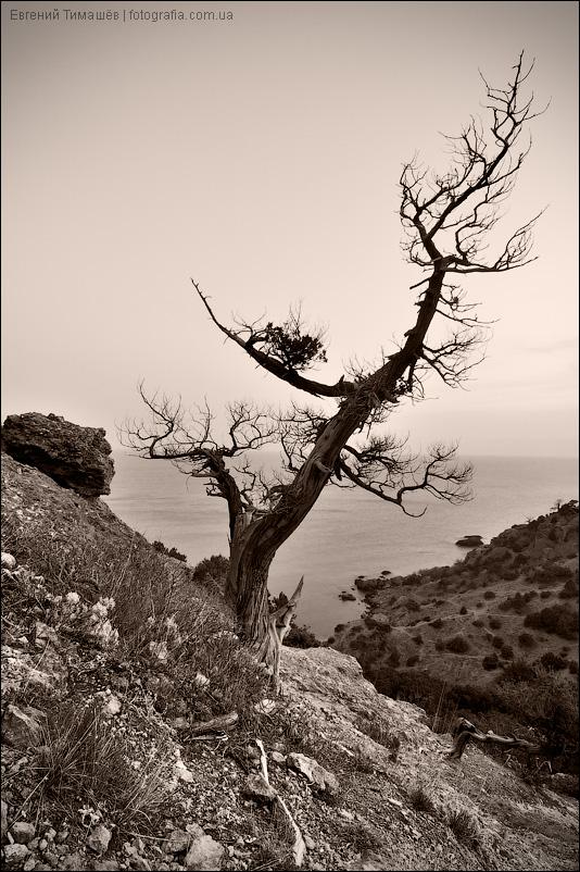 Сухое дерево на камнях