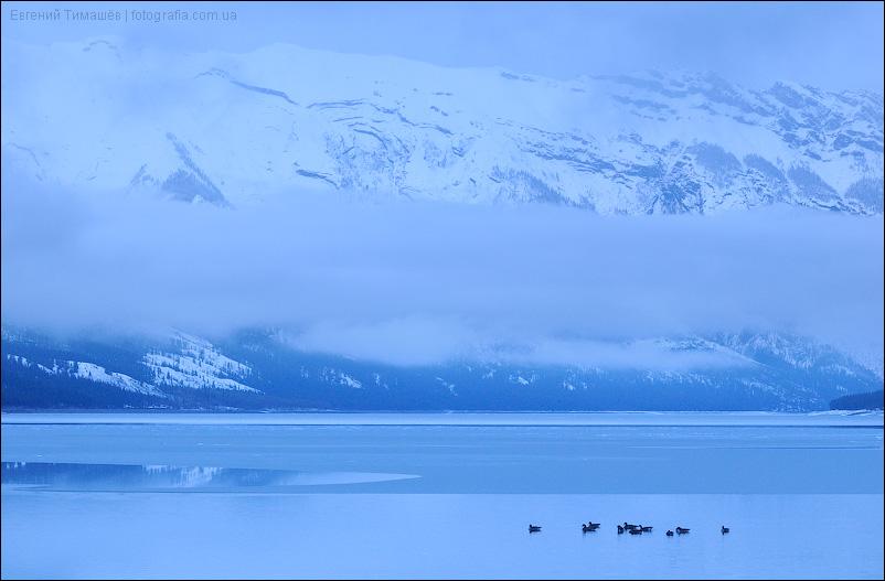 Гуси на озере Минневанка (Minnewanka), Канада, Скалистые горы (Rocky Mountains), национальный парк Банф (Banff)