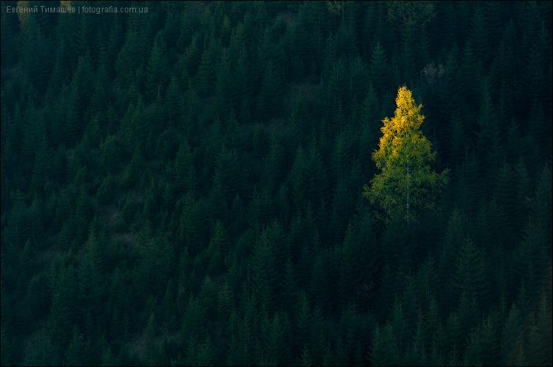 Подсвеченное солнцем дерево на склоне горы