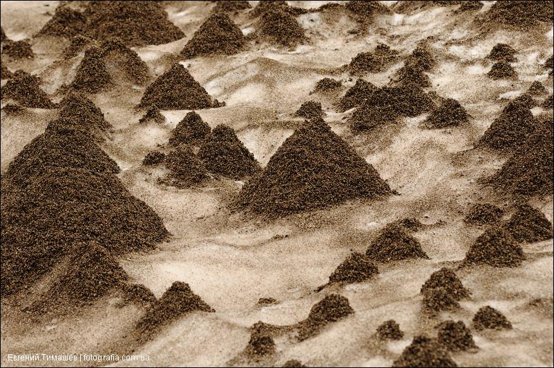 Камчатка, каньон вулкана Мутновский