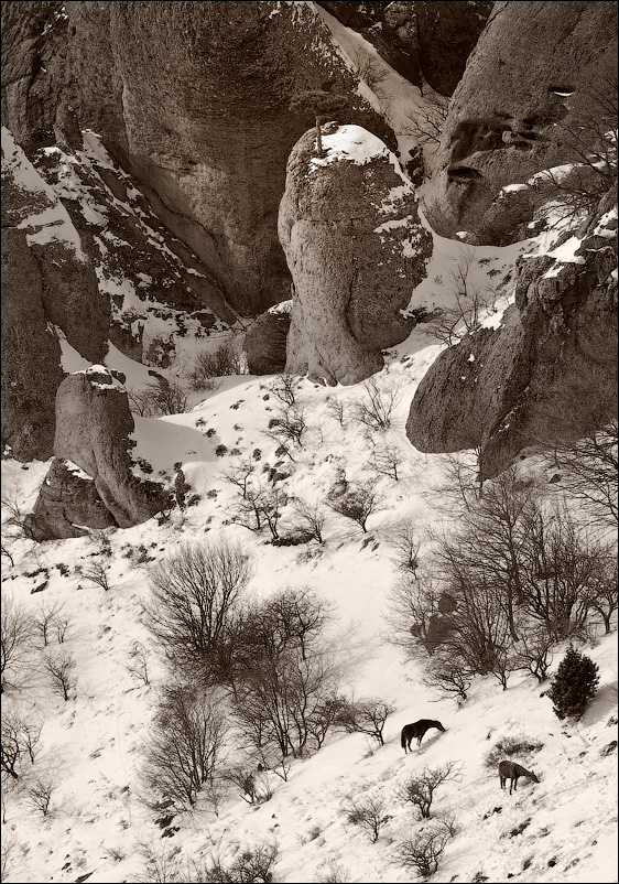 Демерджи. лошади, снег, скалы