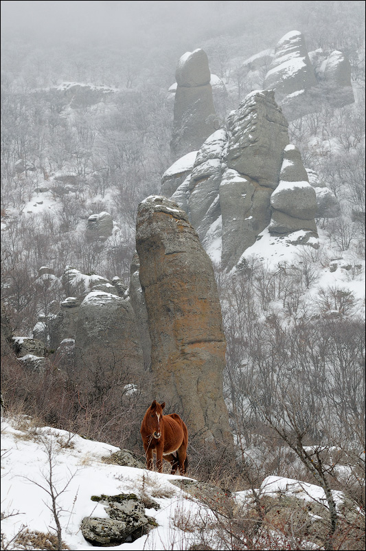 Демерджи, туман, Долина привидений, лошадь