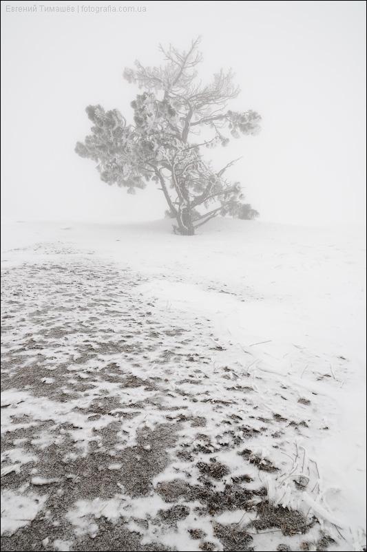 Снег, дерево, туман, Крым