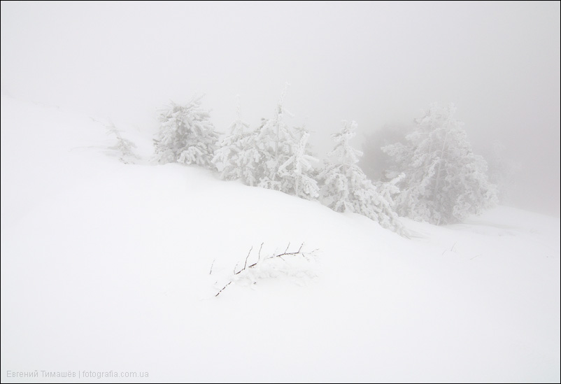 Снег, туман, елки, Крым, Демерджи