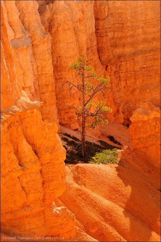 Брайс каньон (Bryce Canyon), США