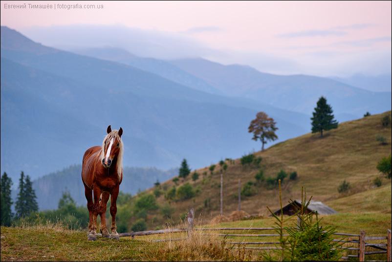 Лошадь в Карпатах, рассвет, утро