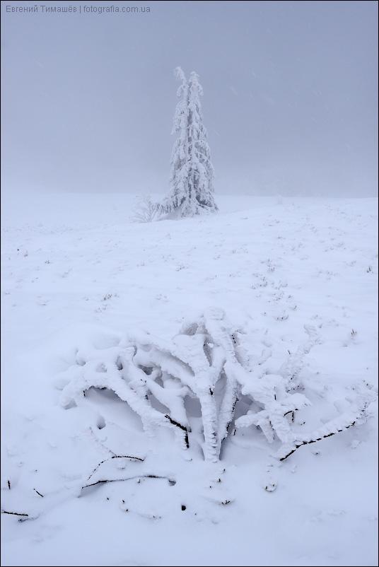 Зима, горы, Карпаты, снег, елка