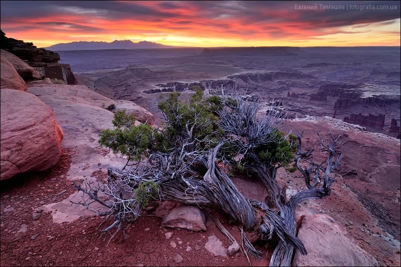 Рассвет в национальном парке Каньонлэндс (Canyonlands), Юта, США