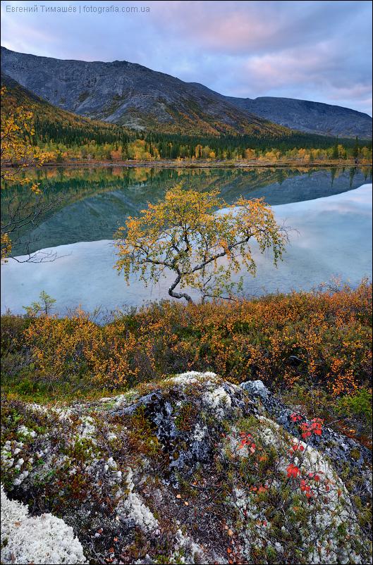 Хибины, береза, озеро