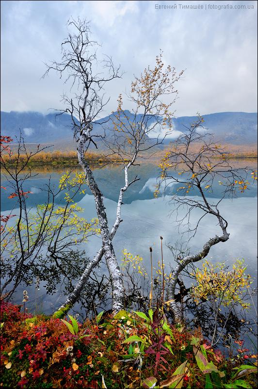 Хибины, озеро Малый Вудьявр, березы