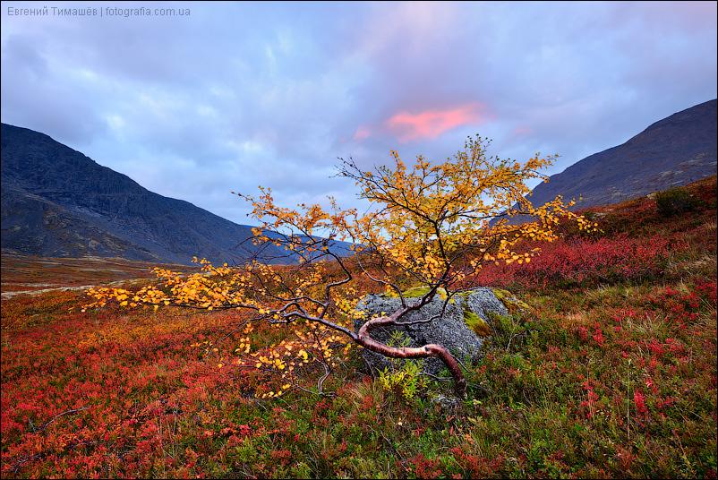 Хибины, дерево, рассвет, утро, горы
