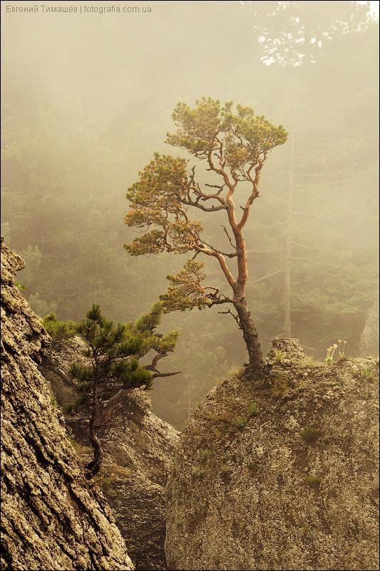 Крым, туман, Демерджи, горы