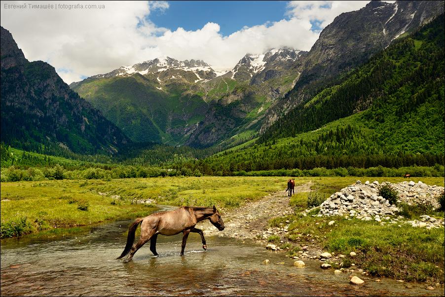 Сванетия, лошади, Грузия