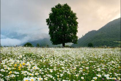 Сванетия. цветы, Грузия