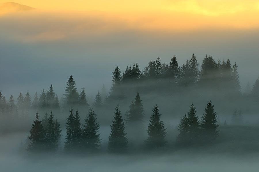 Свет и настроение в пейзаже, Евгений Тимашёв