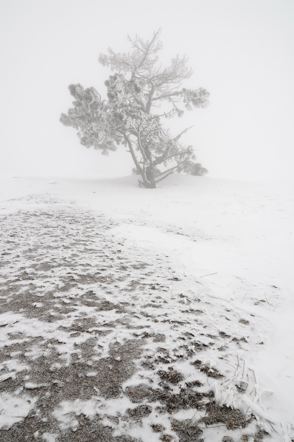 Пейзаж в плохую погоду, Евгений Тимашёв