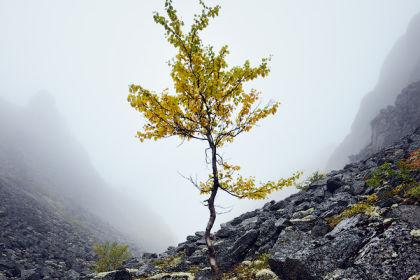 Ущелье Аку-Аку, Хибины, туман