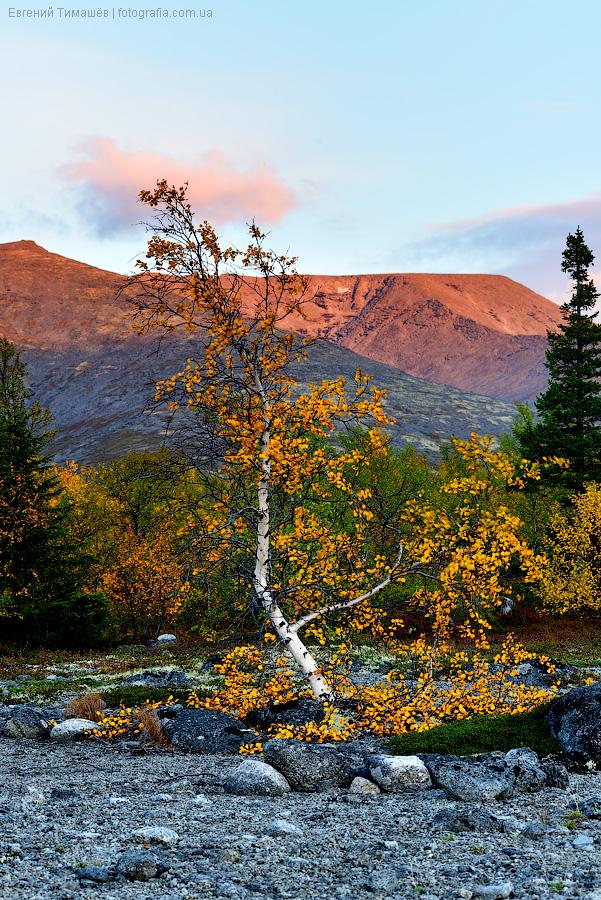 Хибины, лес, деревья, фото