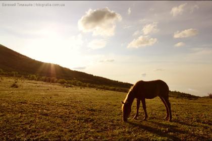 Лошадь на рассвете